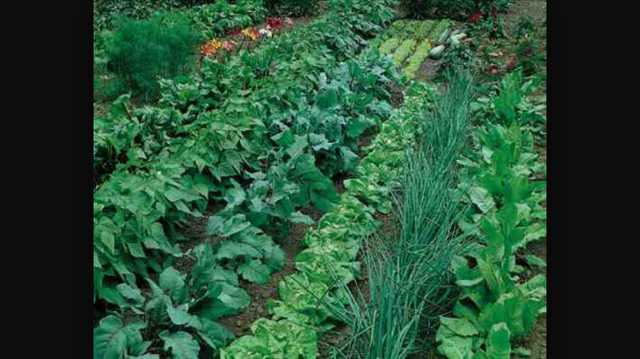 Come Grow With Us. Garden Plots Available